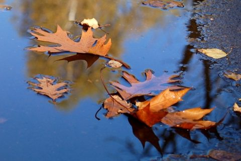 énergie des arbres d'automne